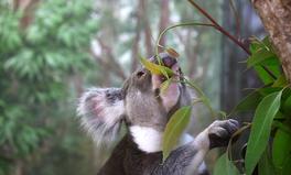 Article: Australia Will Plant 25 Million Trees by 2025 to Compensate for Major Bushfire Destruction