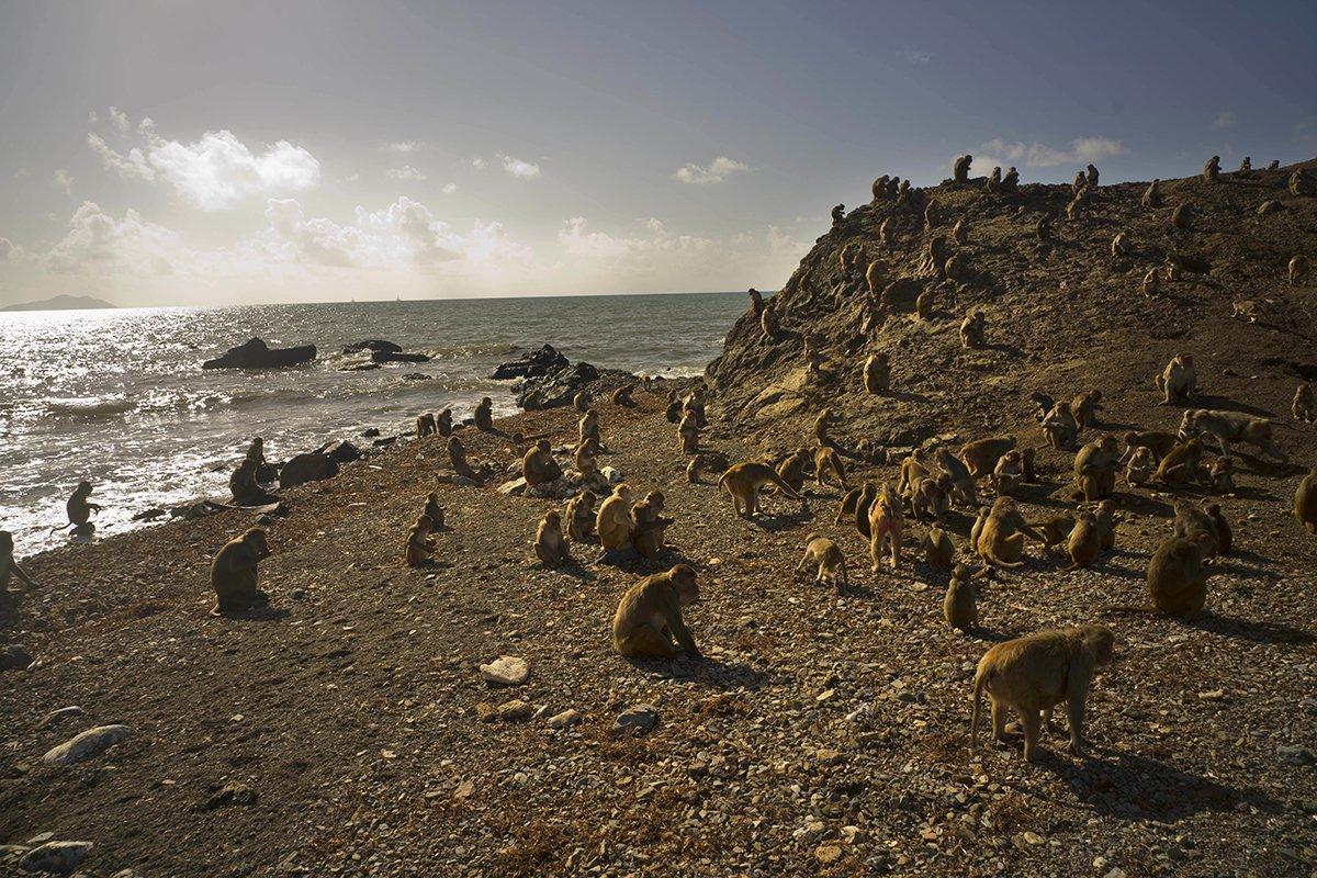 Puerto-Rico-Monkey-Island.jpg