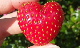 "Artikel: 13 ""Ugly"" Fruits & Vegetables That Are Still Good To Eat"