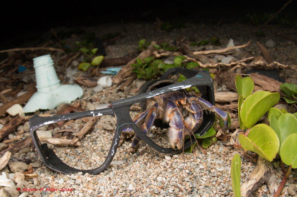 Hermit crab5.jpg