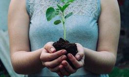 Artikel: Aufforstung ist das aktuell wirksamste Mittel für den Klimaschutz, sagt neue Studie