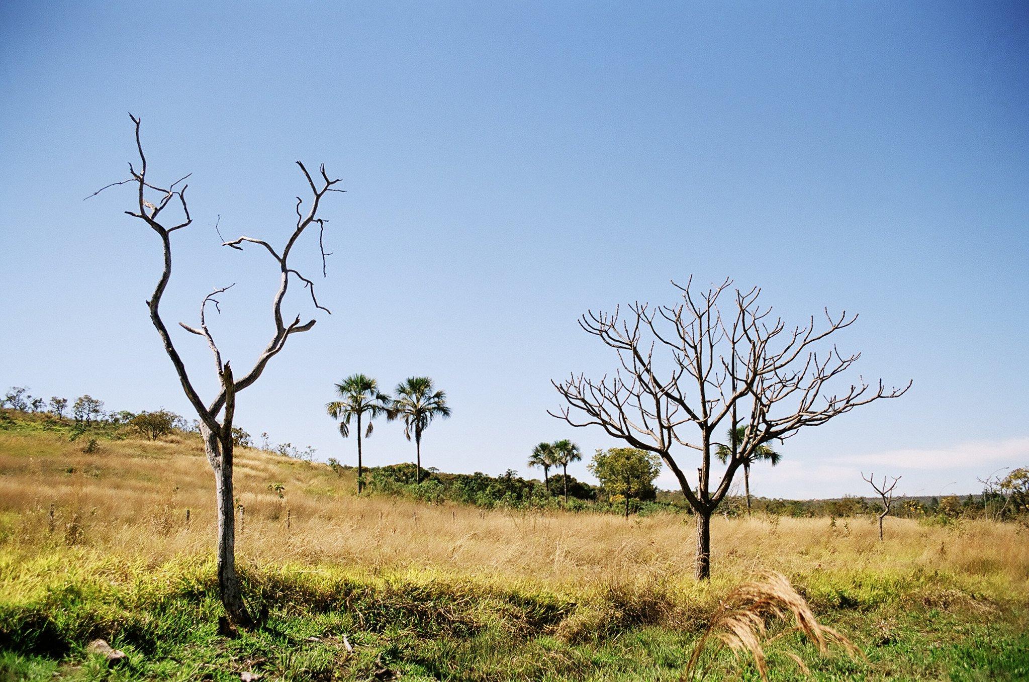 Cerrado grasslands in Brazil