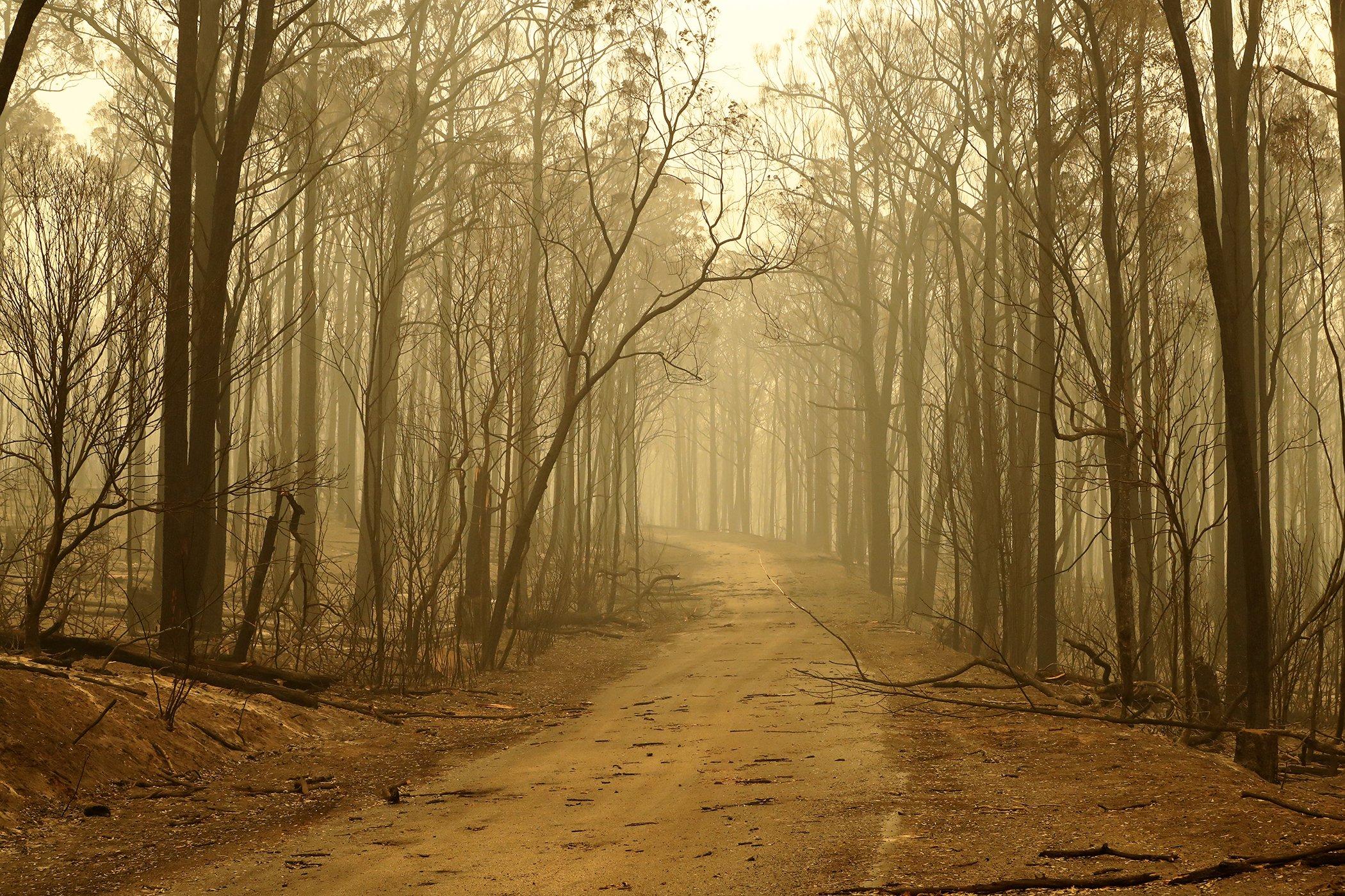 Australia-Wildfires-005.jpg