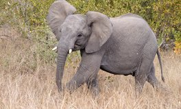 Article: Britain Exports the Most Ivory in the World: Report