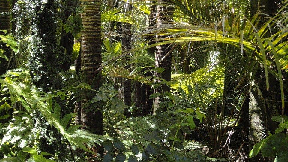 amazonas_regenwald_umweltschutz_klage_klimawandel_global_citizen.jpg