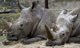 Article: Poachers Killed a White Rhino for Its Horn —in the Middle of a Paris Zoo