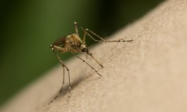 Article: Zambia Aims to Eliminate All Malaria-Related Deaths by 2030