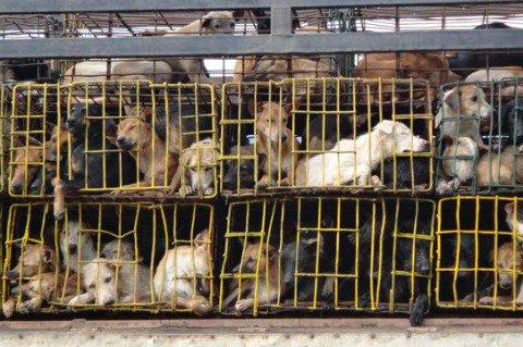 dog-meat-truck.jpg