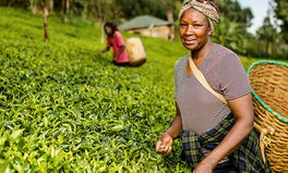 Article: Citi Progress Makers: Kenya Tea Development Agency