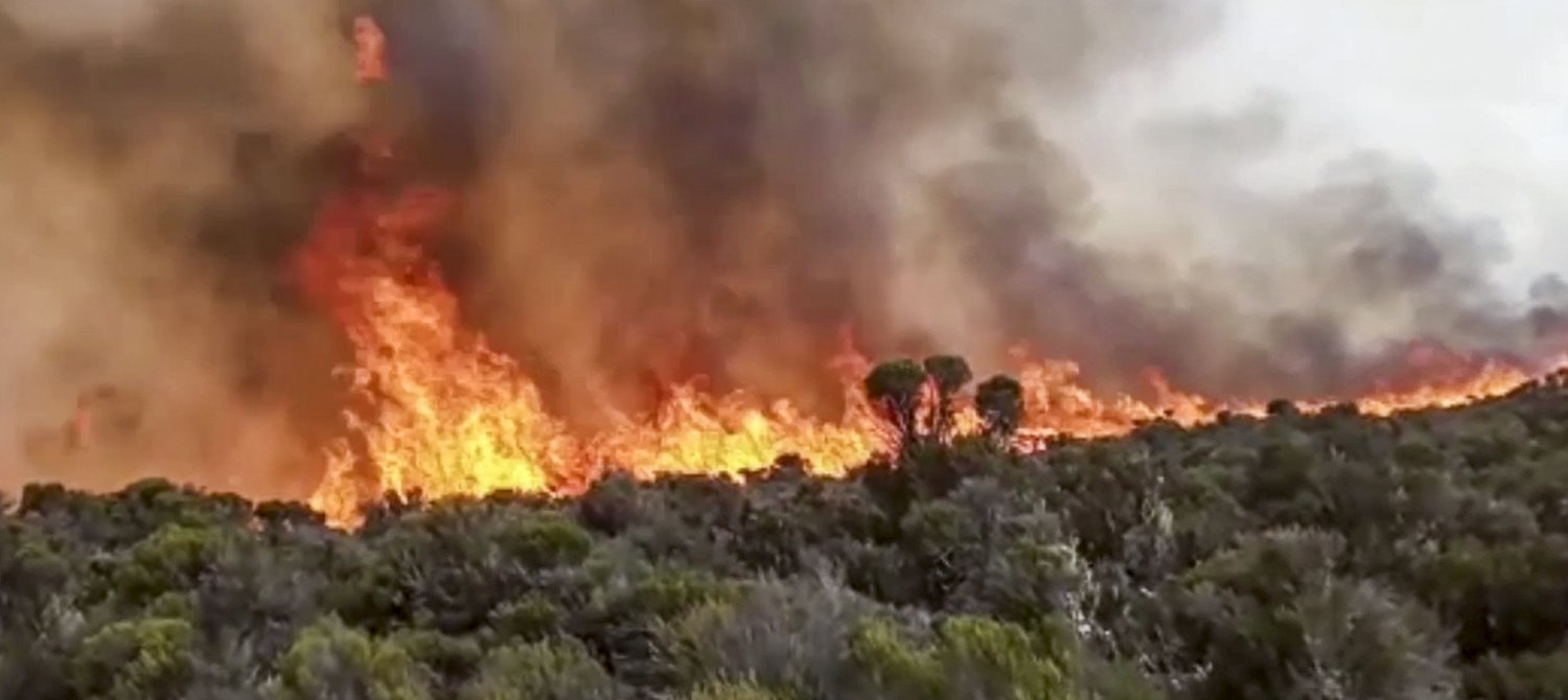 Fires on Mount Kilimanjaro Signal an Ecosystem in Decline