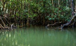 Article: How microloans are lifting women out of poverty and protecting mangrove trees