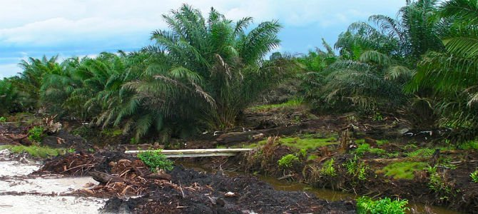 List of books and articles about Deforestation | Online Research