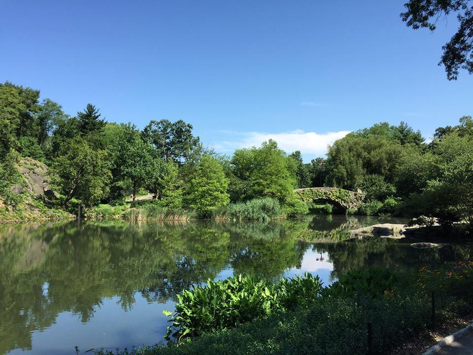 Central Park pond.jpg