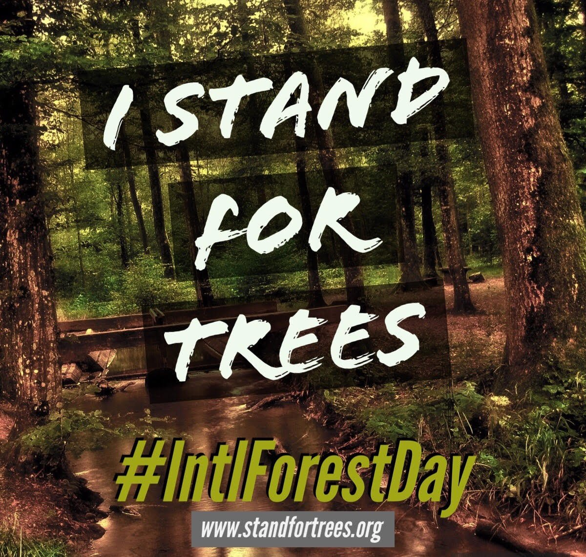 Int. day of forests-B1.jpg