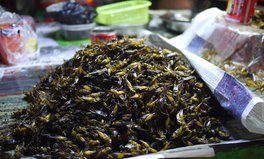 Artículo: How Insects Can Help Fight World Hunger