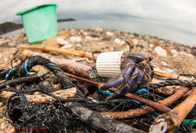 Hermit crab4.jpg