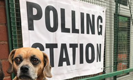 Article: Dogs at Polling Stations Are the Most British Thing Ever