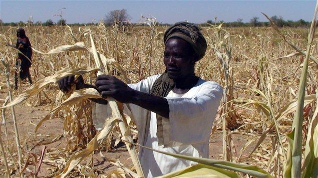 Women food security.jpg