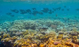 Article: The Great Barrier Reef Has Finally Started to Bounce Back