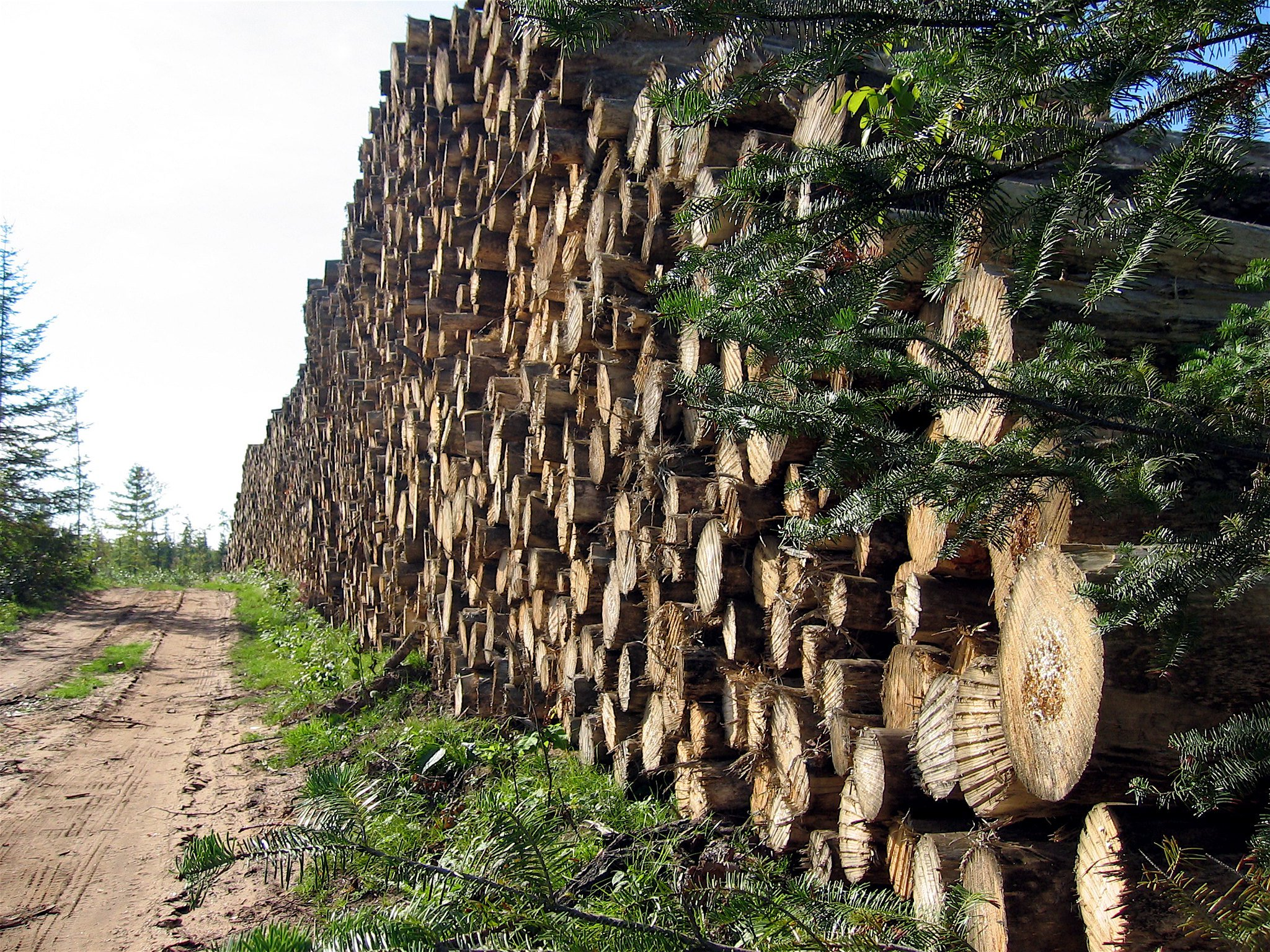 Deforestation- embedded image.jpg