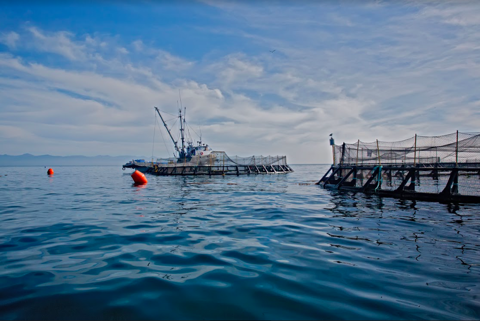 LoveTheWild fish farm