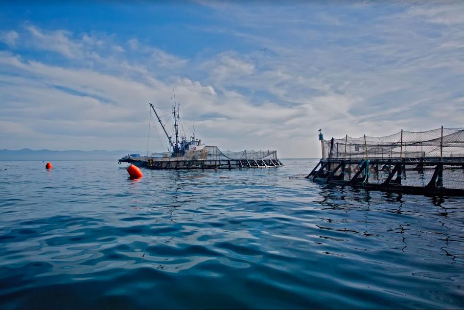 Environmental hero leonardo dicaprio wants to change the for Pacifico fish company