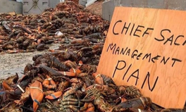 Article: Commercial Fishermen Are Raiding and Destroying Indigenous Fishing Compounds in Canada