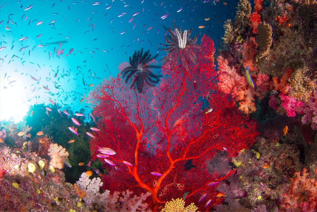 michael-webster-the-ocean-agency-korallenriff-hoffnung-studie-korallenbleiche.png