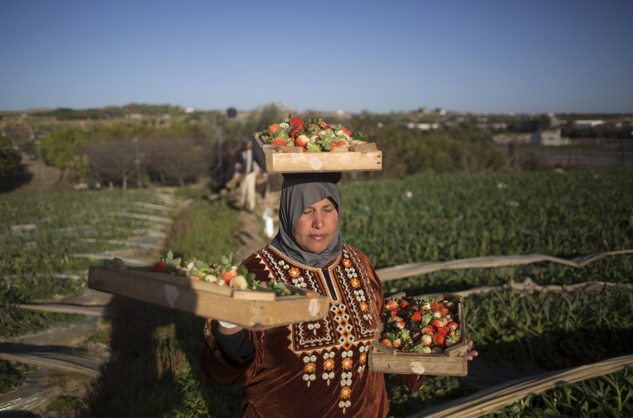 Gaza-Female-Farmers-Womens-Economic-Empowerment.jpg