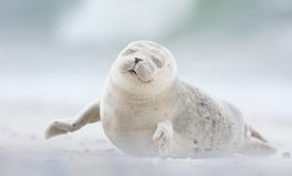 Artikel: We've Never Seen Anything as Full of Joy as This Seal Pup
