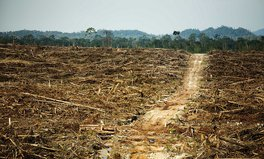Article: Palm Oil Isn't the Problem — Where It's Planted Is, Expert Says