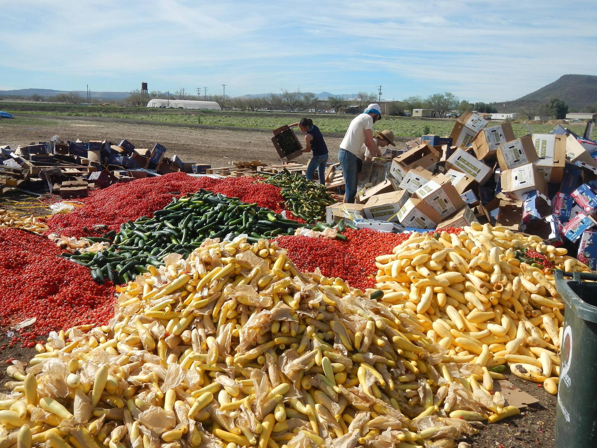 compost arizona food waste