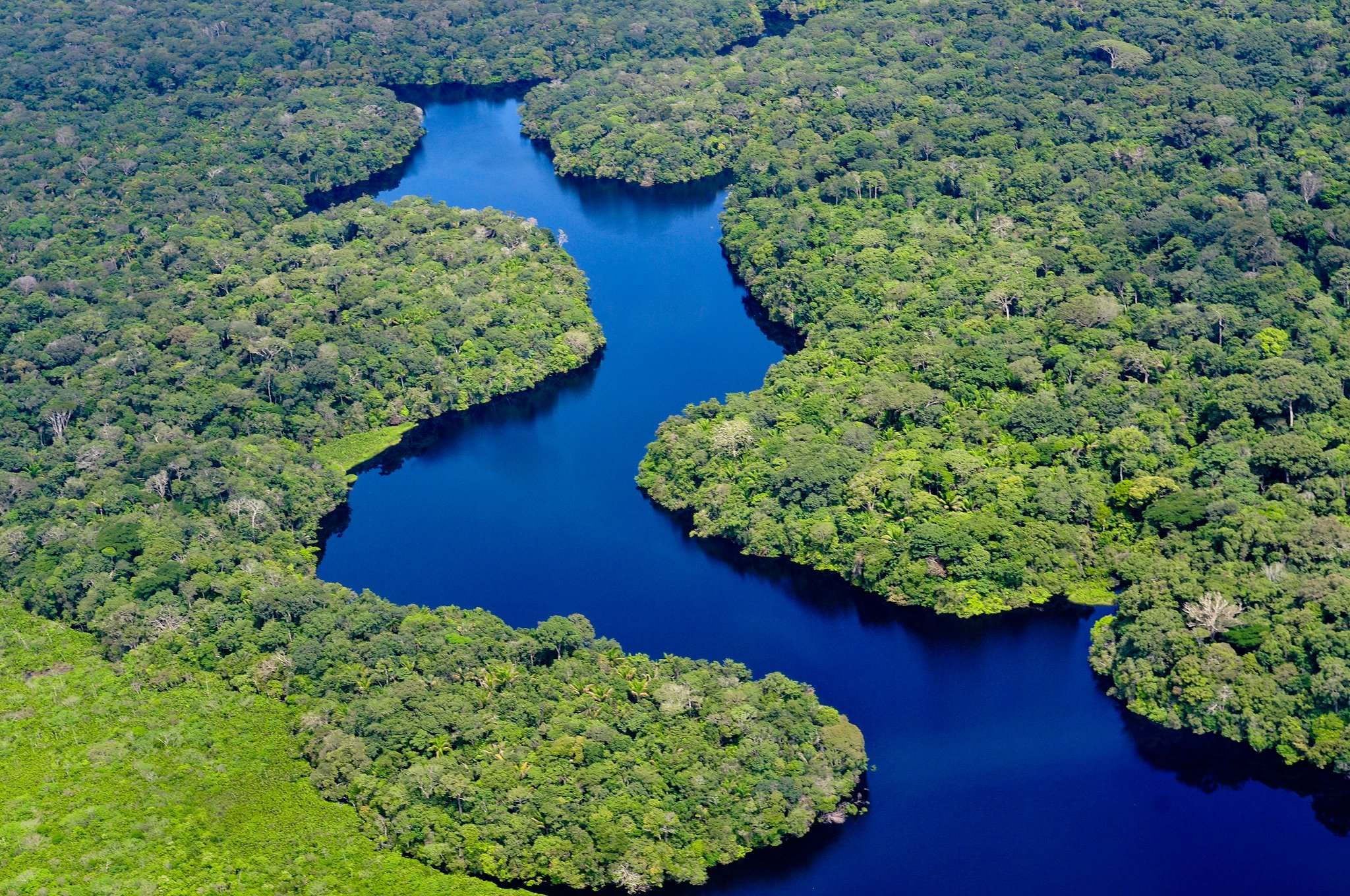 Brazil Replanting Rainforest Amazon