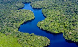 Artikel: This Organization Is Planting 73,000,000 Trees to Save the Amazon