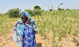 Article: USAID Takes Powerful Strides to Feed the Future