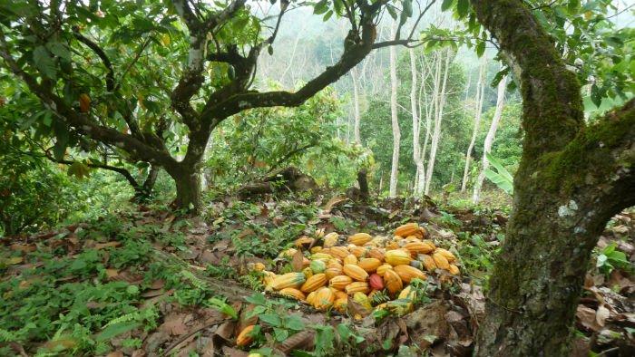 colombian farmers 4.jpg