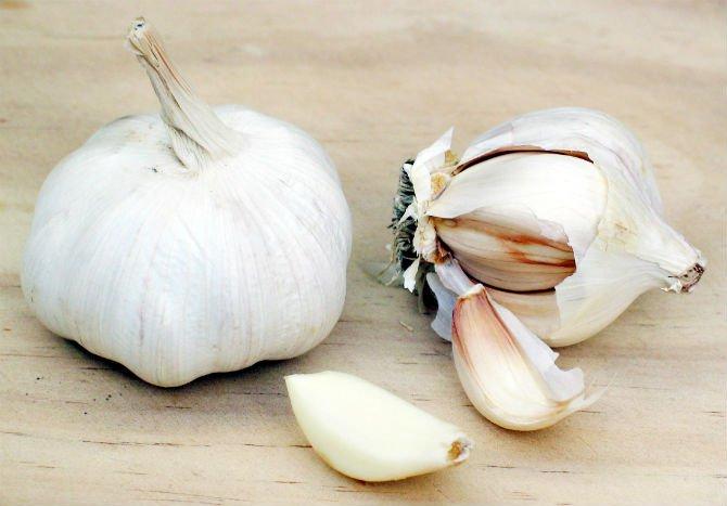 Garlic 2 edited.jpg