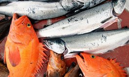 Article: 8 fish you've never heard of – Mislabeling in the seafood industry