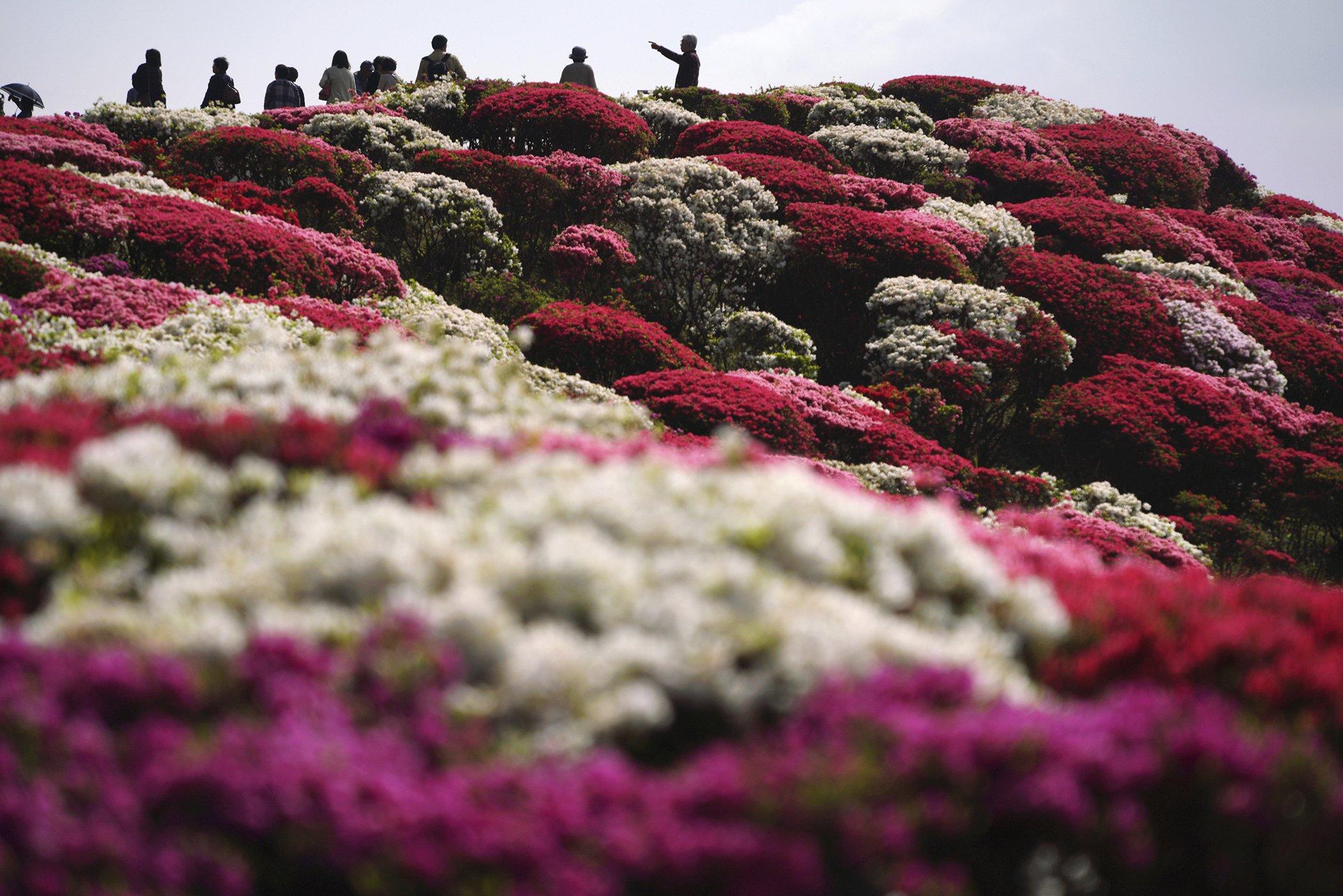 Japan-Spring-Flowers.jpg
