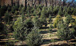 Article: This Farm in The UK Rents Sustainable Christmas Trees