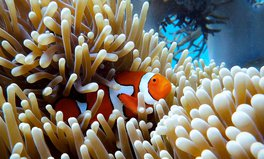 Artículo: The Great Barrier Reef Has Lost Half Its Corals in the Last 25 Years