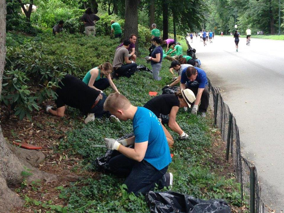 Central park cleaning.jpg