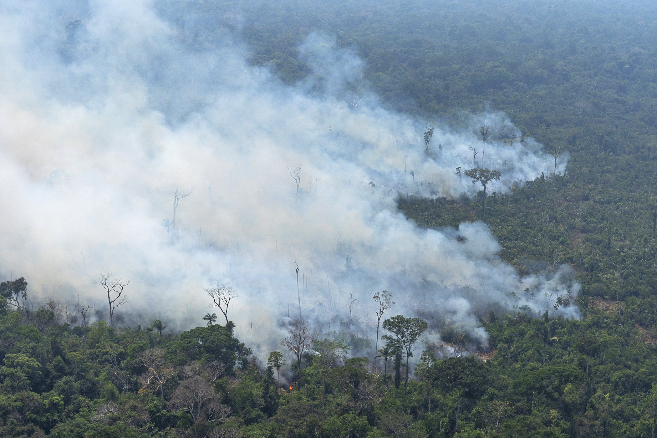 Amazon-Climate-Change-Deforestation-Wildfires-Brazil.jpg
