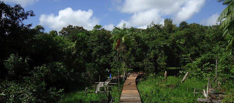rainforest bridge.jpg