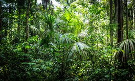 Artículo: Indigenous Communities and Green Groups Unite to Protect Forests in Latin America