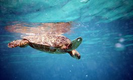 Article: world sea turtle day
