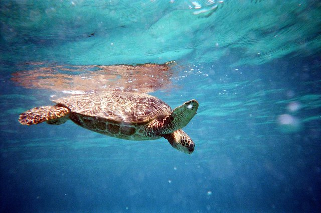 world sea turtle day