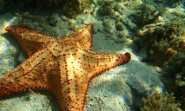 Article: High CO2 Levels in Water Can 'Dissolve' Starfish, Scientists Say