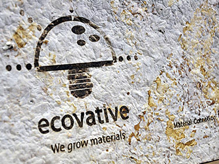 Ecovative-B4.jpg