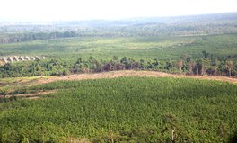 Article: Conservation Group in Cambodia Says Logging in Protected Area Has Increased Amid COVID-19 Pandemic